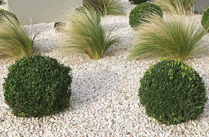 Graviers et galets : avec des plantes