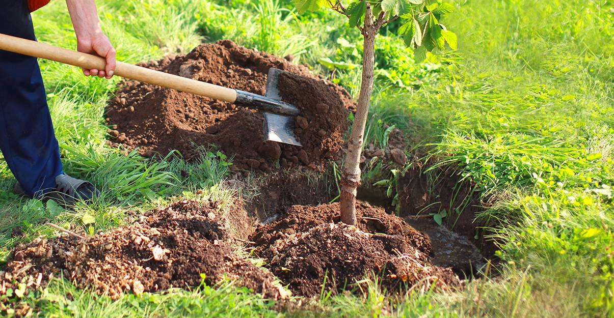 Aménagement de jardin : les plantations