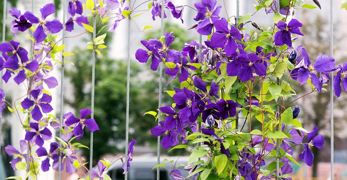 Petit jardin: planter à la verticale
