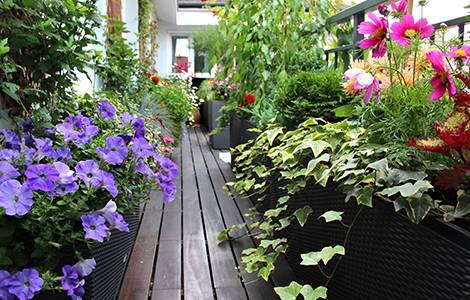 Vis à vis balcon : Planter de la végétation à foison
