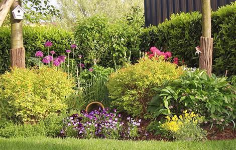 Aménagement d'un jardin : plantes faciles d'entretien