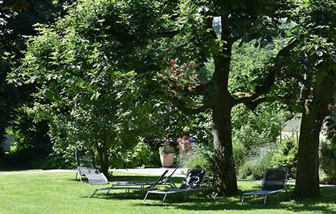 Aménagement d'un jardin : penser aux arbres