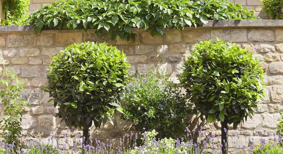Mur mitoyen ou clôture: droits et obligations