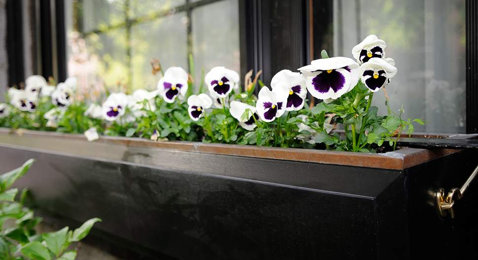 jardinières et pots de fleurs