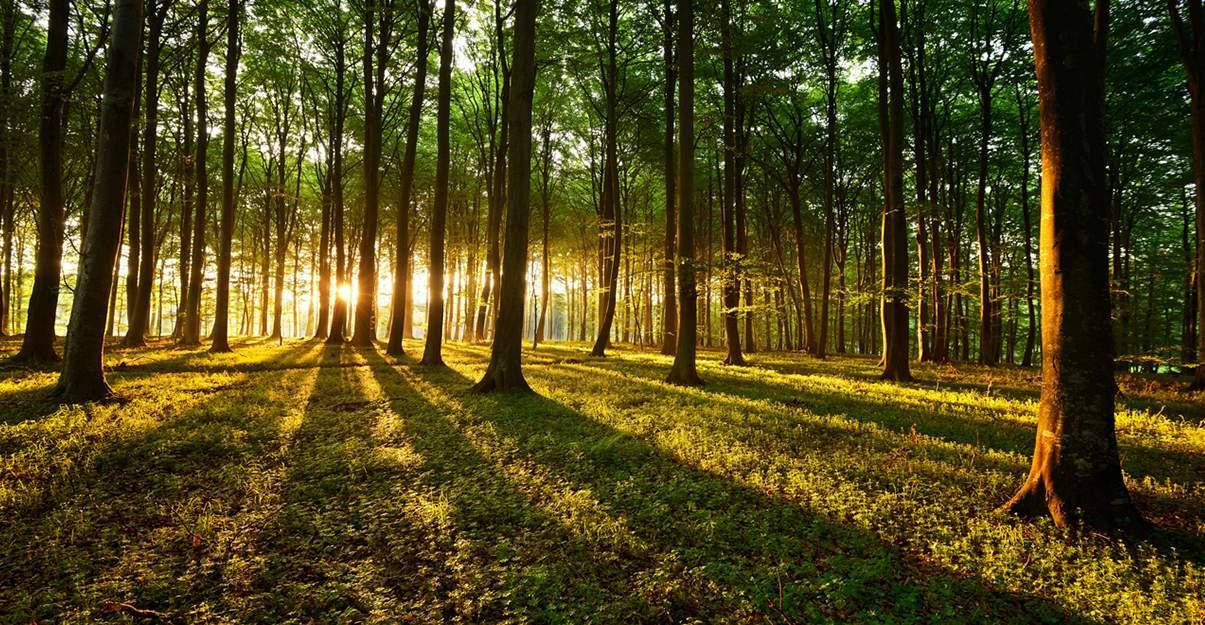 Le bois, une énergie renouvelable