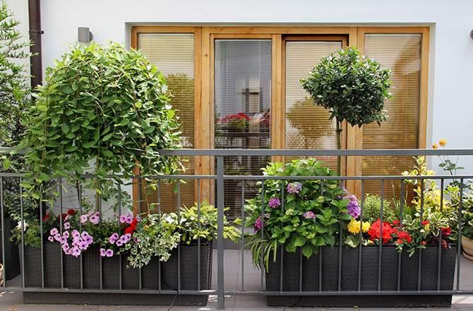 aménager un jardin sur son balcon : attention à l'exposition