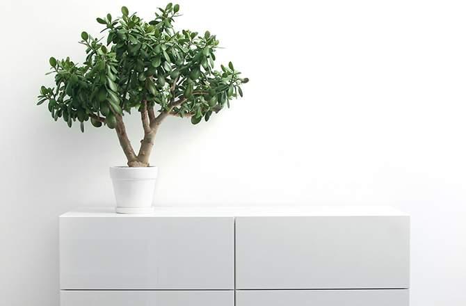 Décoration d'appartement : commode minimaliste