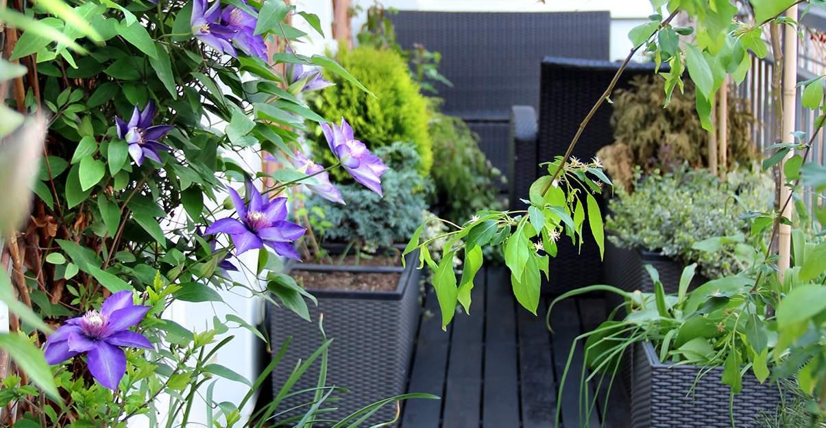 Aménagement d'un balcon:  végétalisation