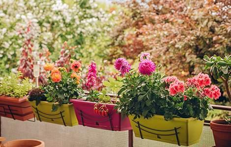 Créer un jardin sur son balcon :  les jardinières à l'intérieur