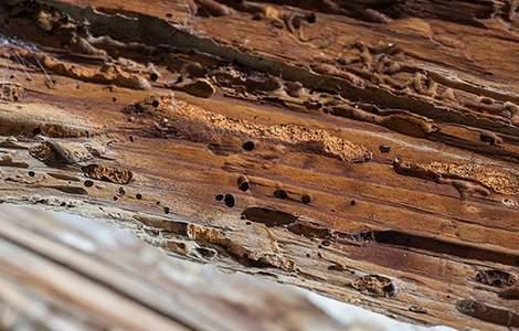 Traitement de charpente : trace de termites