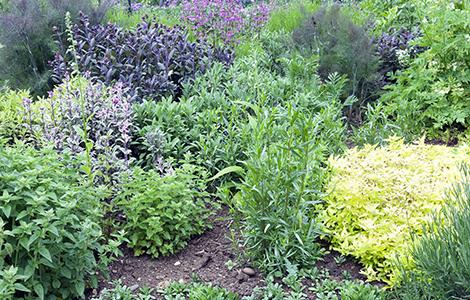Le style jardin aromatique