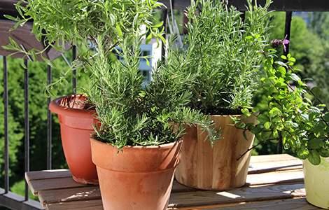 aménager un jardin sur son balcon : les aromatiques