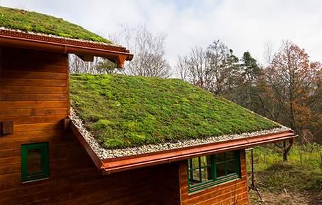 Le toit végétalisé