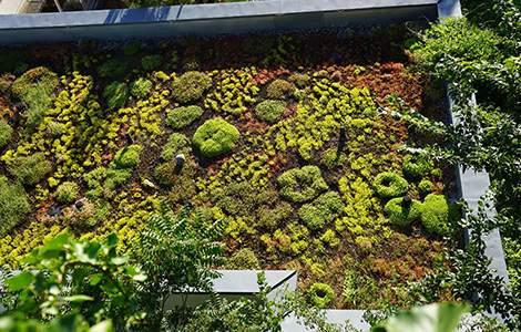 La toiture végétalisée suppose une structure solide pour la porter