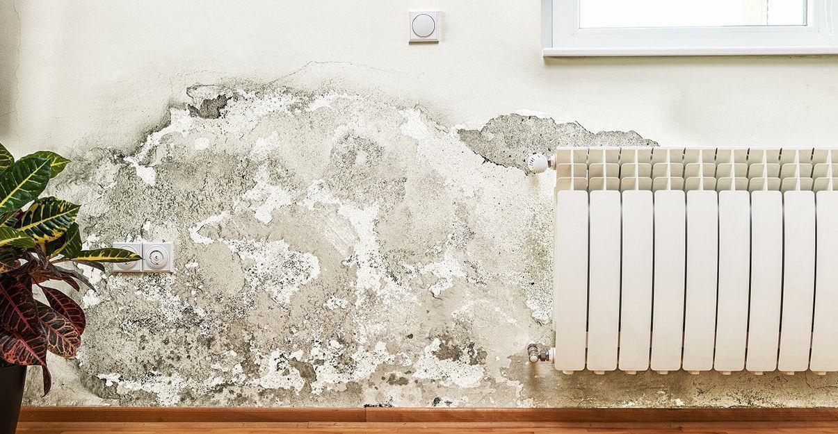Rénovation d'un mur intérieur humide