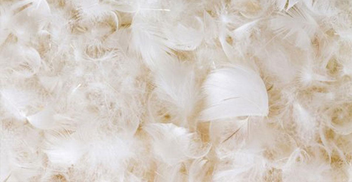 Isolant en laine de canard