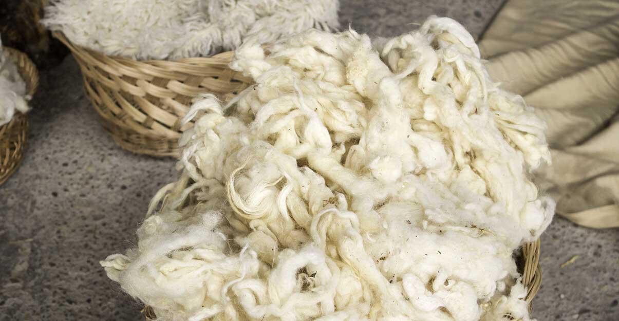 Isolant en laine de mouton
