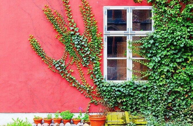 Couleurs façade: rose vif