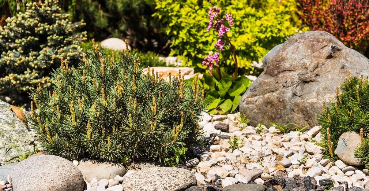 jouer avec les plantes dans un jardins sans pelouse