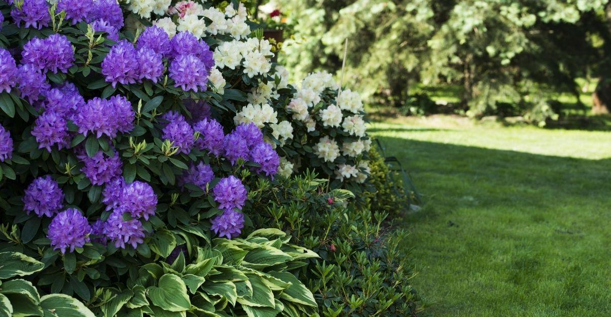 les plantes du jardin ombragé