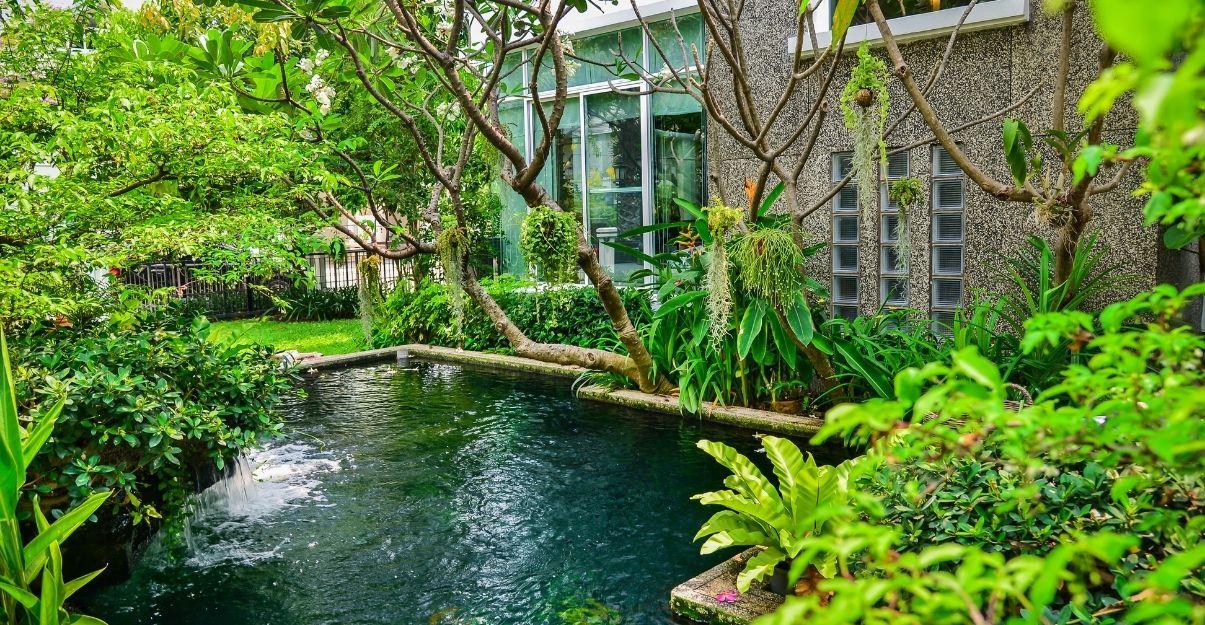plantes autour d'une piscine