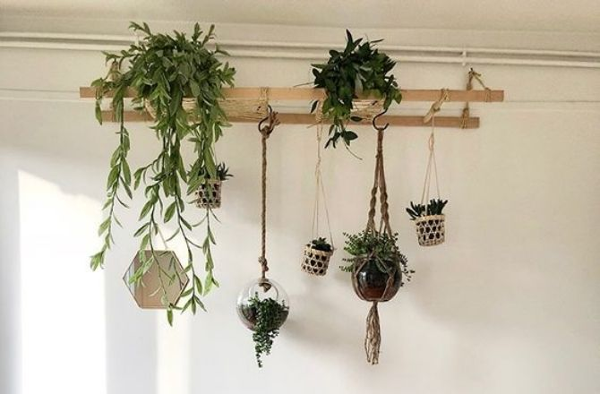 mur végétal échelle