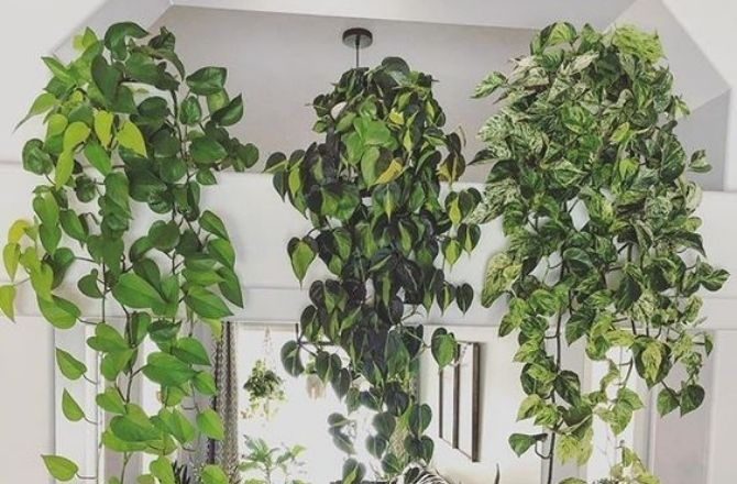 mur végétal en suspension