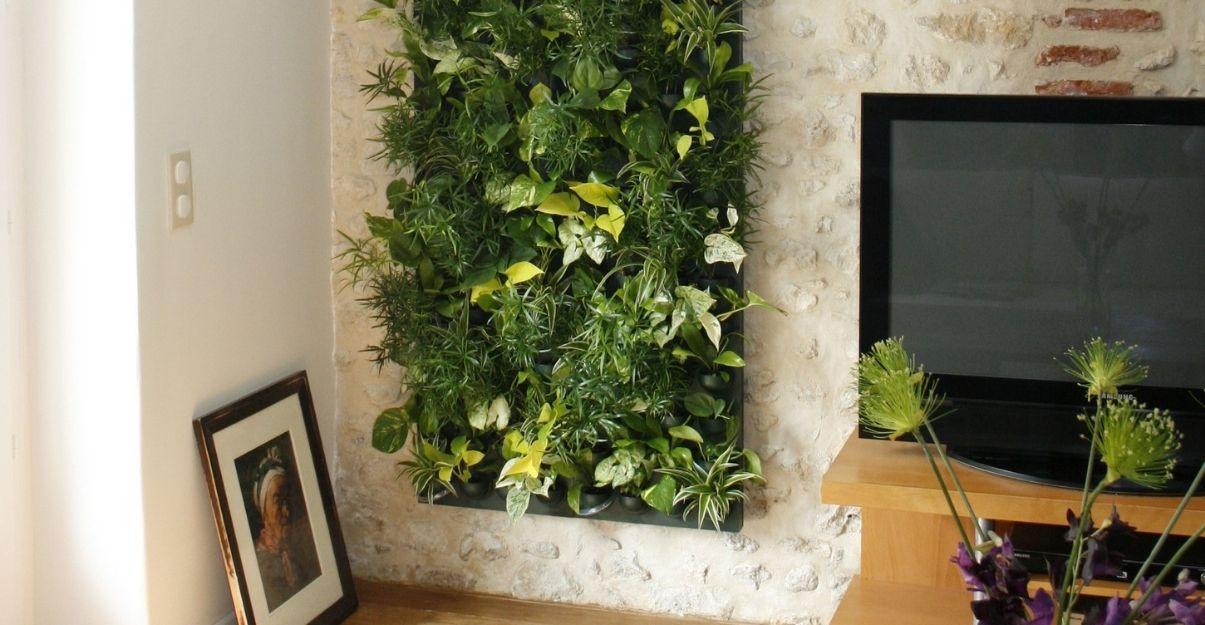mur végétal petite superficie